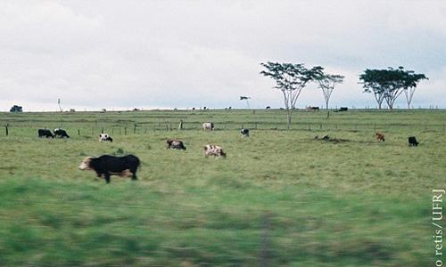 Japorã (Mato Grosso do Sul, Brasil)